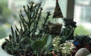 potten bloemen