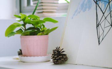 3 tips voor het verzorgen van planten in huis
