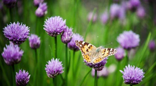 Inspiratie voor een vrolijke en kleurrijke tuin