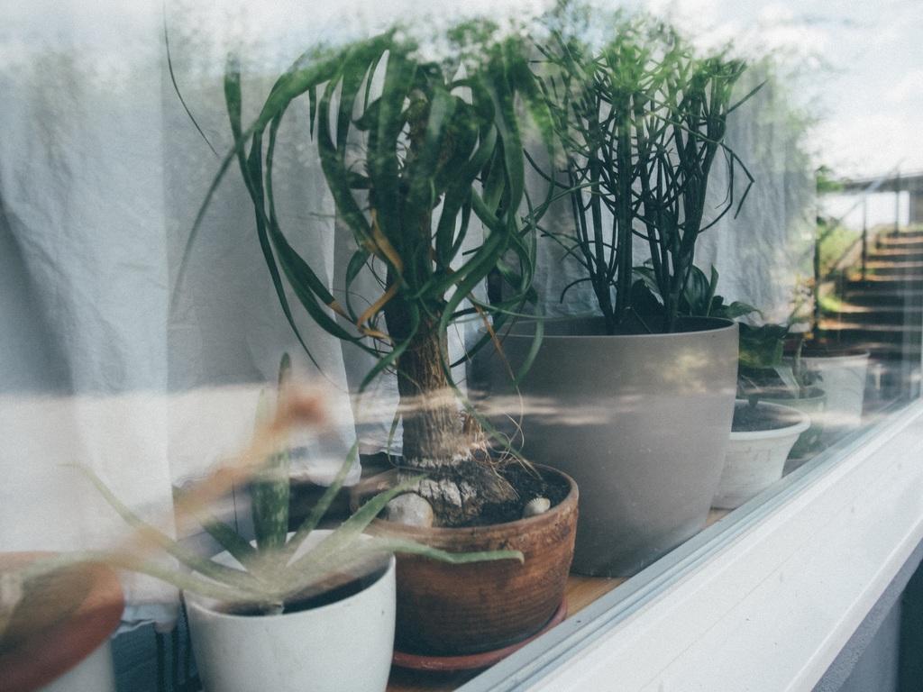 Bloemen of Planten