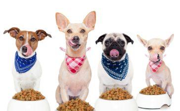 Het gebruik van graanvrij hondenvoer