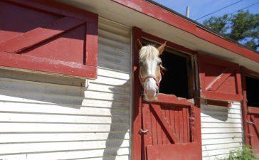 Een paard houden aan huis